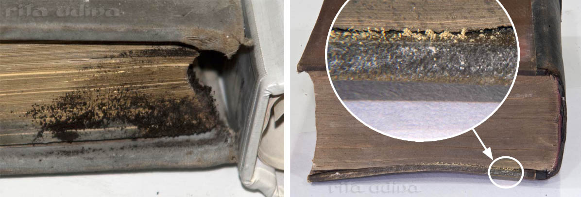 Mould on books