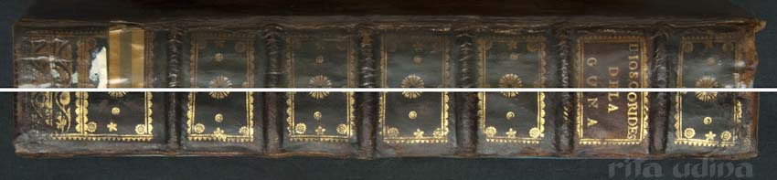 Spine with varnish (above) and without it (under).