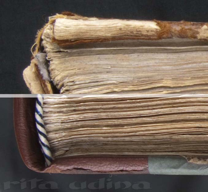 Anatomia Humani Corporis, by G. Bidloo (1685). Paper stuck-on headband (reproduction)